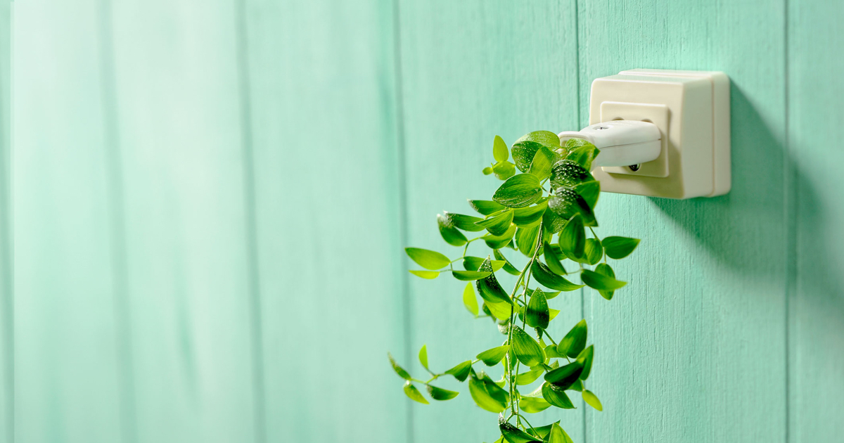 Electrical socket sprouting a vine